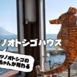 日本で唯一!養殖の見学可能な観光スポット、タツノオトシゴハウス