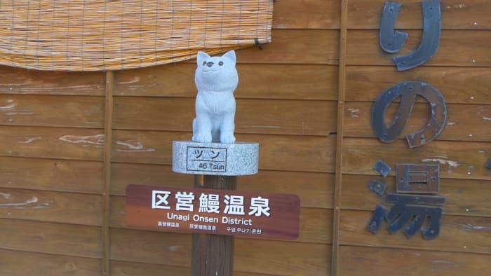 鰻温泉 犬